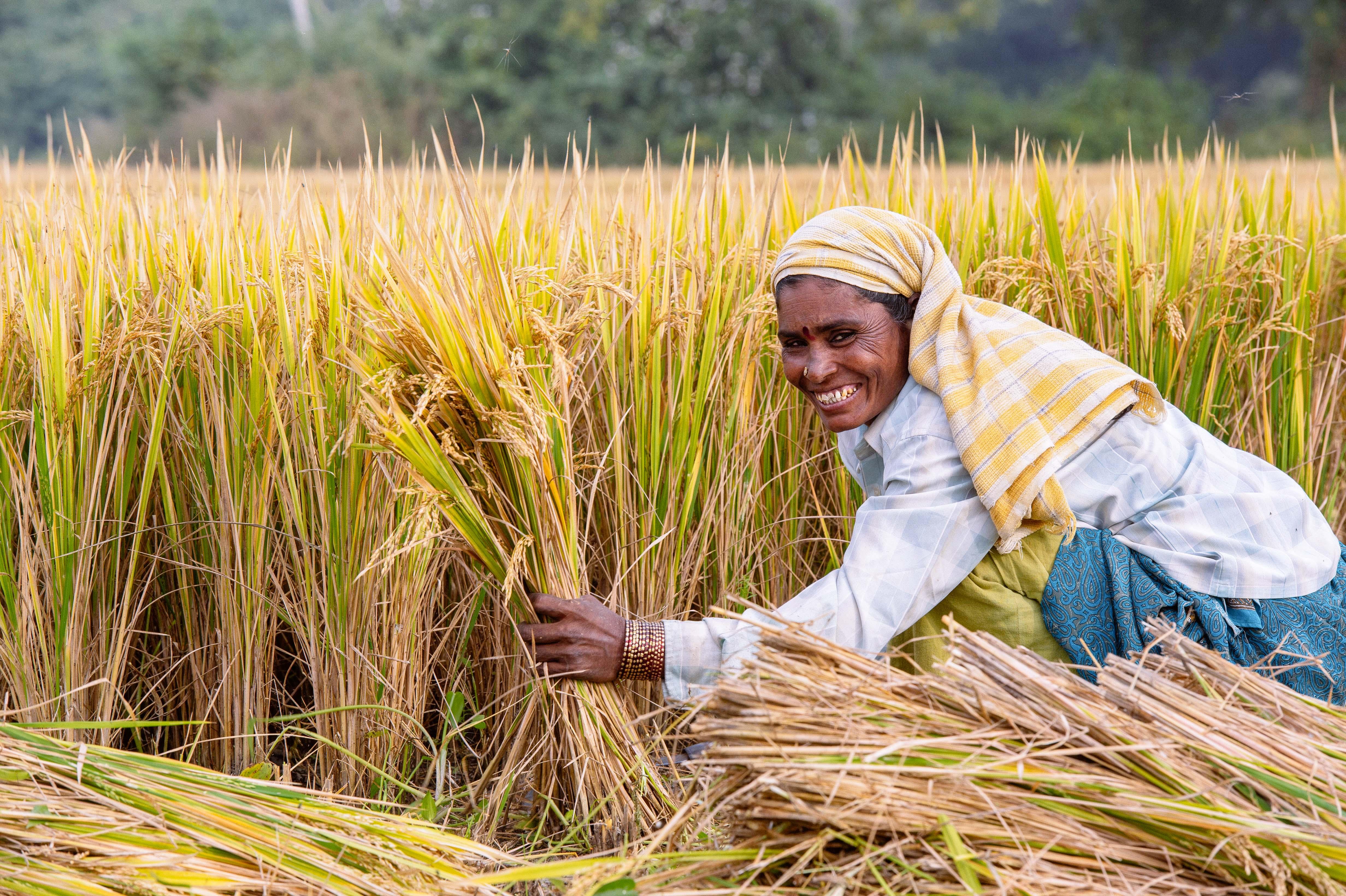 a woman rice planter